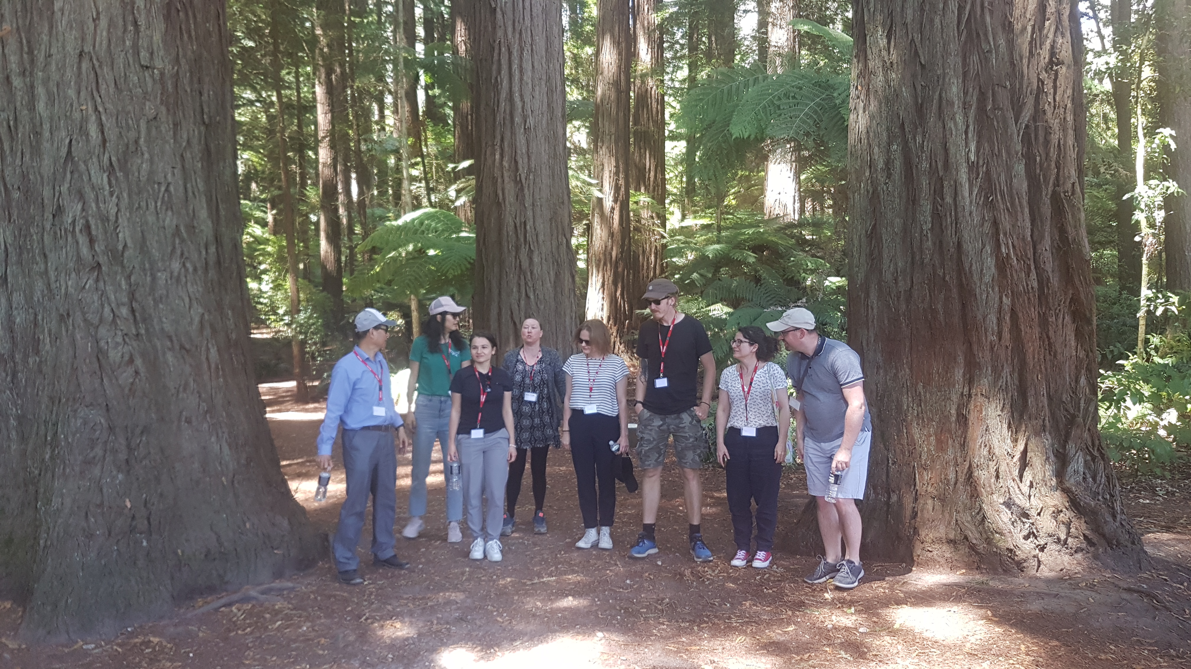 Confused assembling in redwoods at SCION